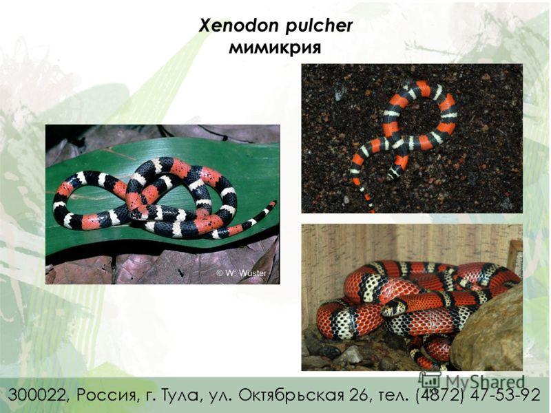 Xenodon pulcher мимикрия Lioheterodon madagascariensis – о. Мадагаскар