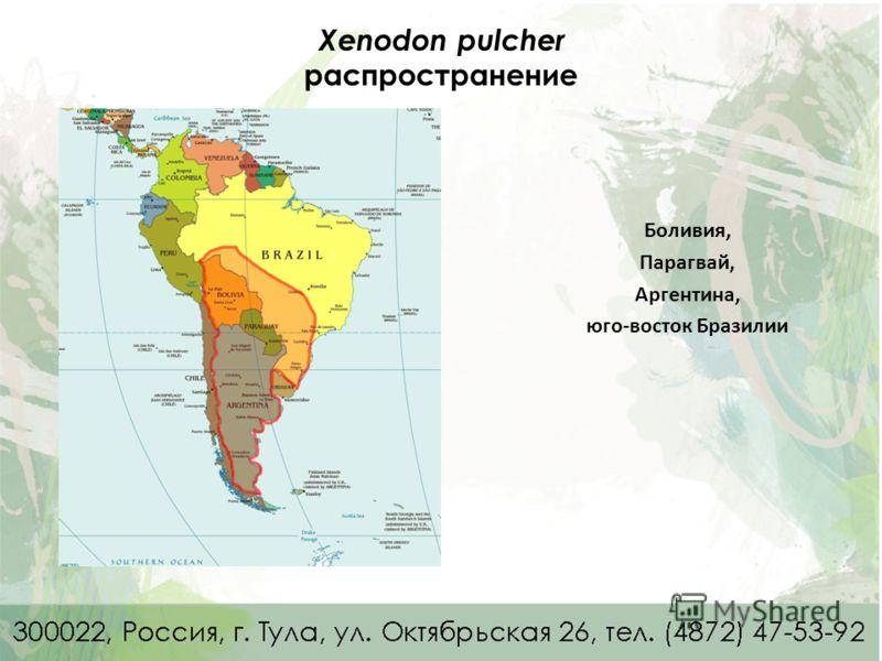Xenodon pulcher распространение Боливия, Парагвай, Аргентина, юго-восток Бразилии
