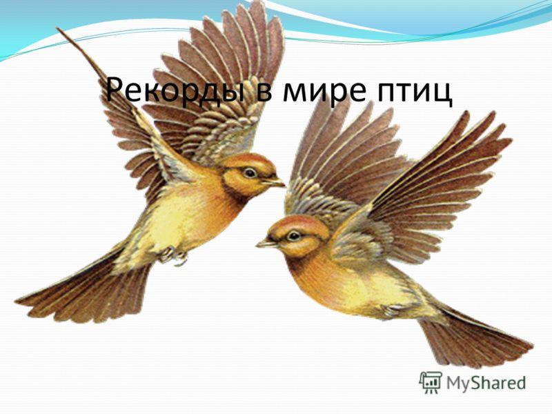 Рекорды в мире птиц