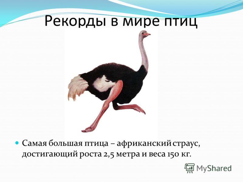 Рекорды в мире птиц Самая большая птица – африканский страус, достигающий роста 2,5 метра и веса 150 кг.