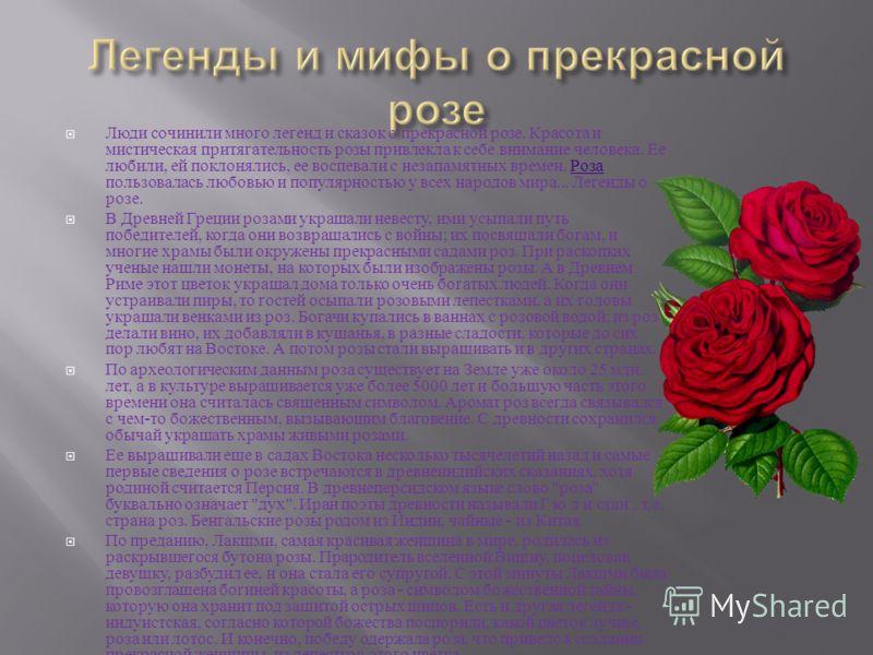 Люди сочинили много легенд и сказок о прекрасной розе. Красота и мистическая притягательность розы привлекла к себе внимание человека. Ее любили, ей поклонялись, ее воспевали с незапамятных времен. Роза пользовалась любовью и популярностью у всех нар