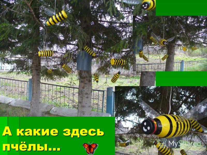 А какие здесь пчёлы…