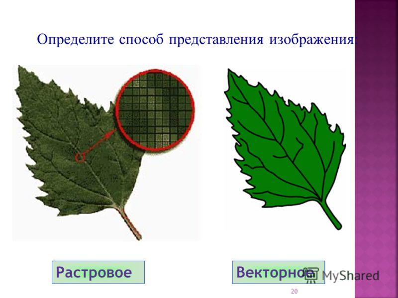 РастровоеВекторное Определите способ представления изображения: 20