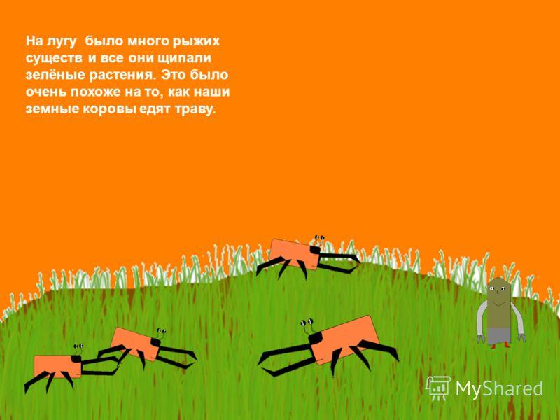 На лугу было много рыжих существ и все они щипали зелёные растения. Это было очень похоже на то, как наши земные коровы едят траву.