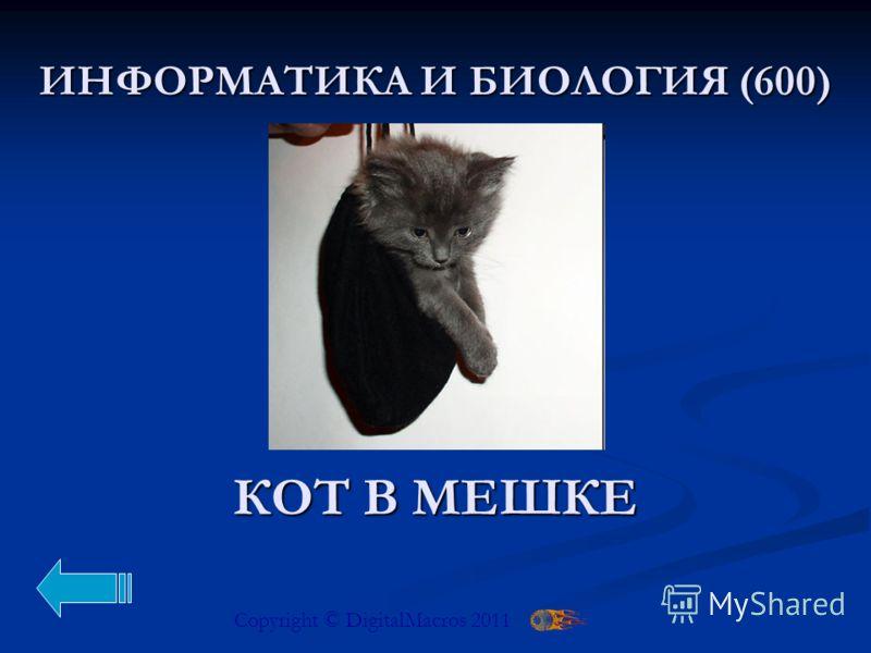 Copyright © DigitalMacros 2011 КОТ В МЕШКЕ ВЫБИРАЙ-КА (100)