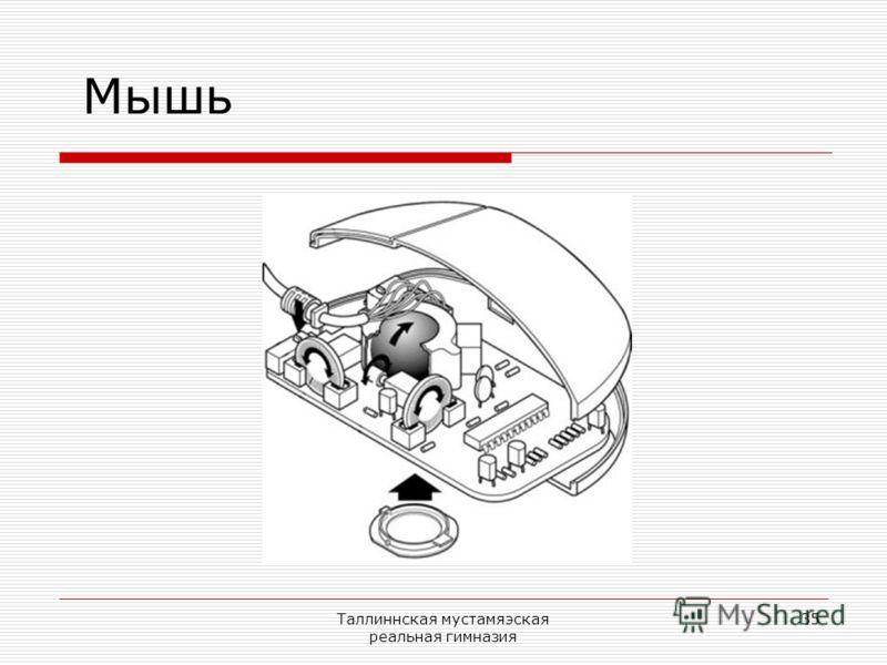 Таллиннская мустамяэская реальная гимназия 35 Мышь