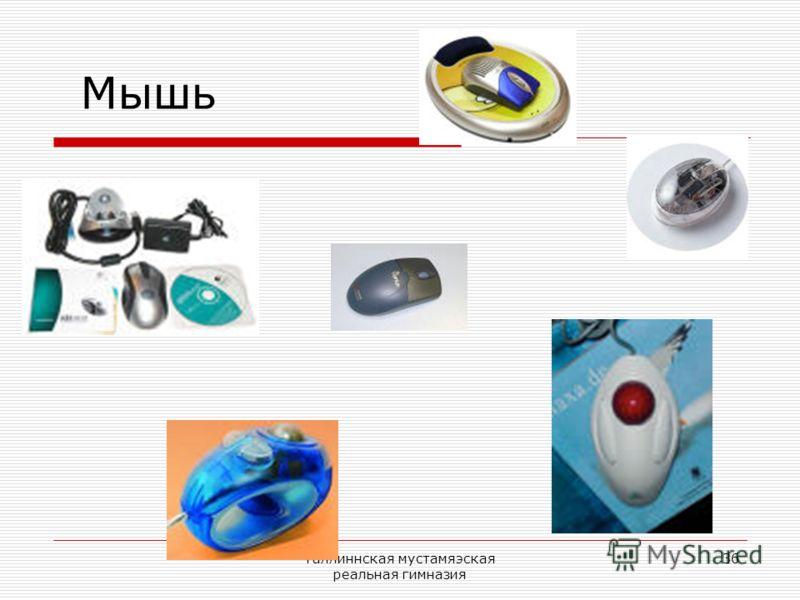 Таллиннская мустамяэская реальная гимназия 36 Мышь