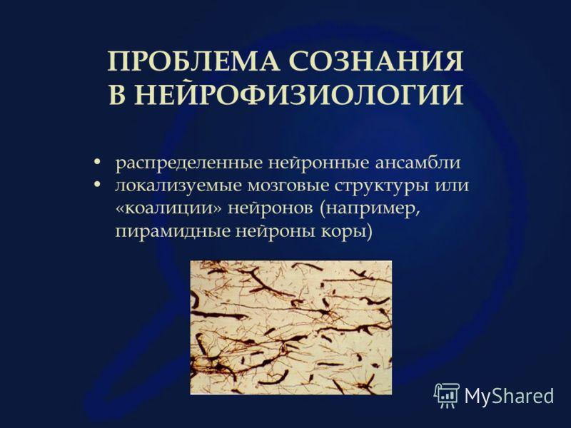 ПРОБЛЕМА СОЗНАНИЯ В НЕЙРОФИЗИОЛОГИИ распределенные нейронные ансамбли локализуемые мозговые структуры или «коалиции» нейронов (например, пирамидные нейроны коры)