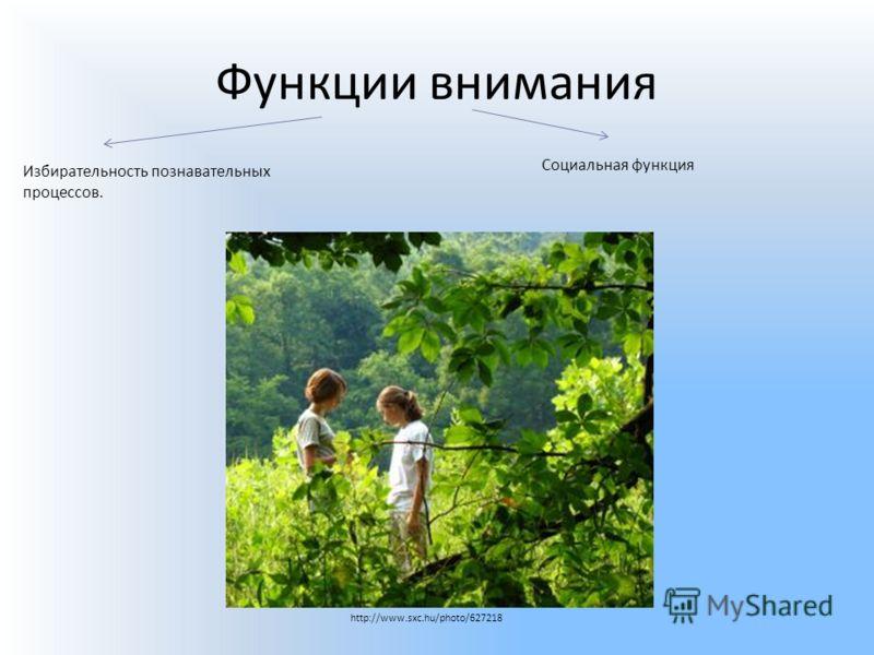 Функции внимания Избирательность познавательных процессов. Социальная функция http://www.sxc.hu/photo/627218