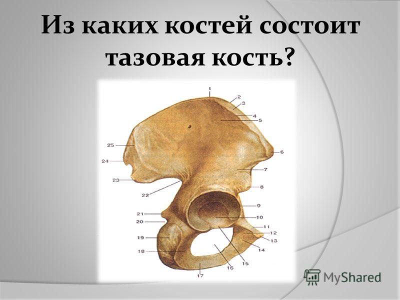 Из каких костей состоит тазовая кость?