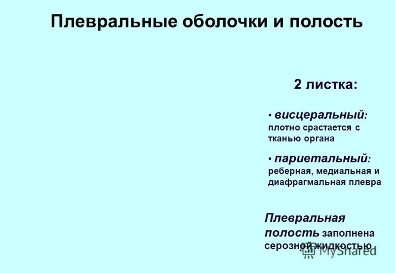 Плевральные оболочки и полость висцеральный : плотно срастается с тканью органа париетальный : реберная, медиальная и диафрагмальная плевра 2 листка: Плевральная полость заполнена серозной жидкостью