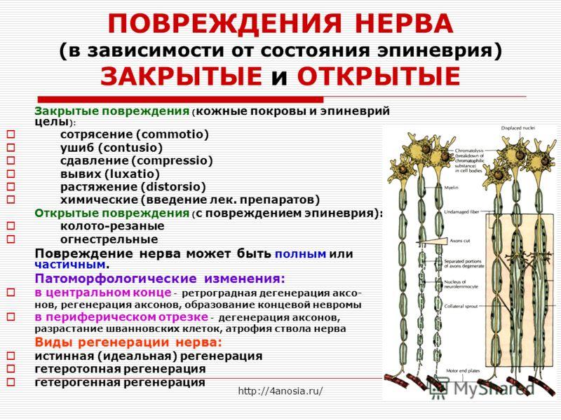 ПОВРЕЖДЕНИЯ НЕРВА (в зависимости от состояния эпиневрия) ЗАКРЫТЫЕ и ОТКРЫТЫЕ Закрытые повреждения ( кожные покровы и эпиневрий целы ): сотрясение (commotio) ушиб (contusio) сдавление (compressio) вывих (luxatio) растяжение (distorsio) химические (вве