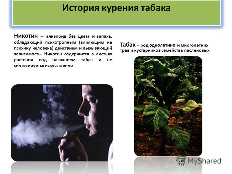 История курения табака Никотин – алкалоид без цвета и запаха, обладающий психотропным (влияющим на психику человека) действием и вызывающий зависимость. Никотин содержится в листьях растения под названием табак и не синтезируется искусственно Табак –
