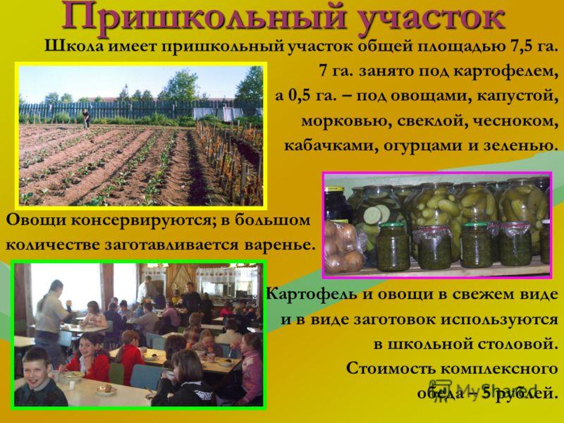 Пришкольный участок Школа имеет пришкольный участок общей площадью 7,5 га. 7 га. занято под картофелем, а 0,5 га. – под овощами, капустой, морковью, свеклой, чесноком, кабачками, огурцами и зеленью. Овощи консервируются; в большом количестве заготавл