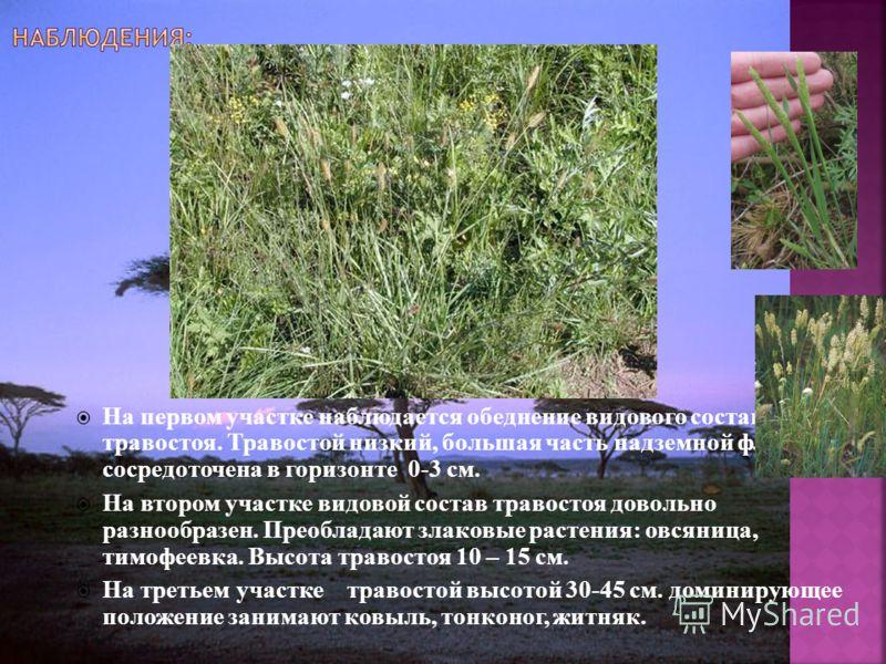 На первом участке наблюдается обеднение видового состава травостоя. Травостой низкий, большая часть надземной флоры сосредоточена в горизонте 0-3 см. На втором участке видовой состав травостоя довольно разнообразен. Преобладают злаковые растения: овс