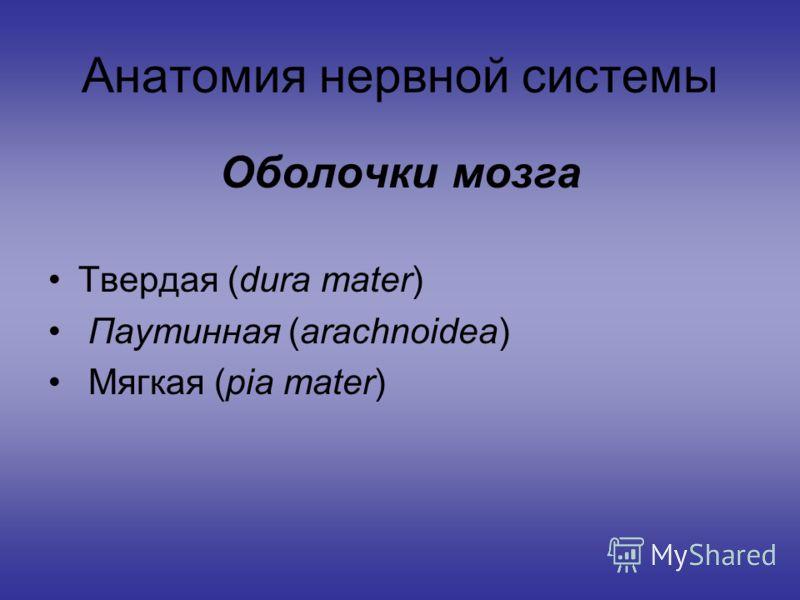 Анатомия нервной системы Оболочки мозга Твердая (dura mater) Паутинная (arachnoidea) Мягкая (pia mater)