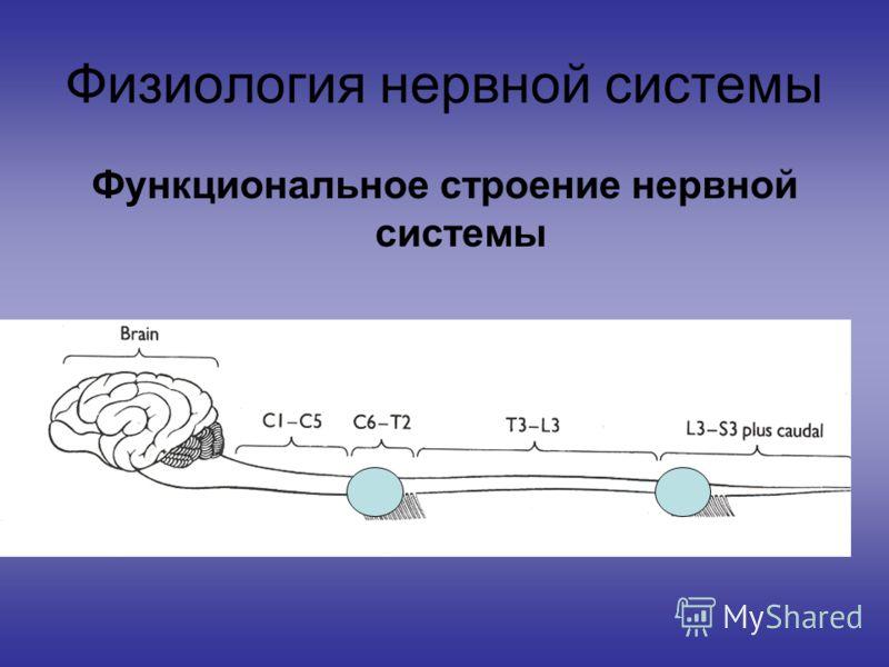Физиология нервной системы Функциональное строение нервной системы