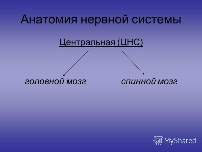 Анатомия нервной системы Центральная (ЦНС) головной мозг спинной мозг