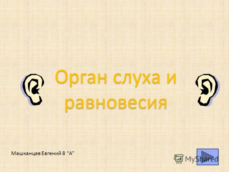 Орган слуха и равновесия Машканцев Евгений 8 А