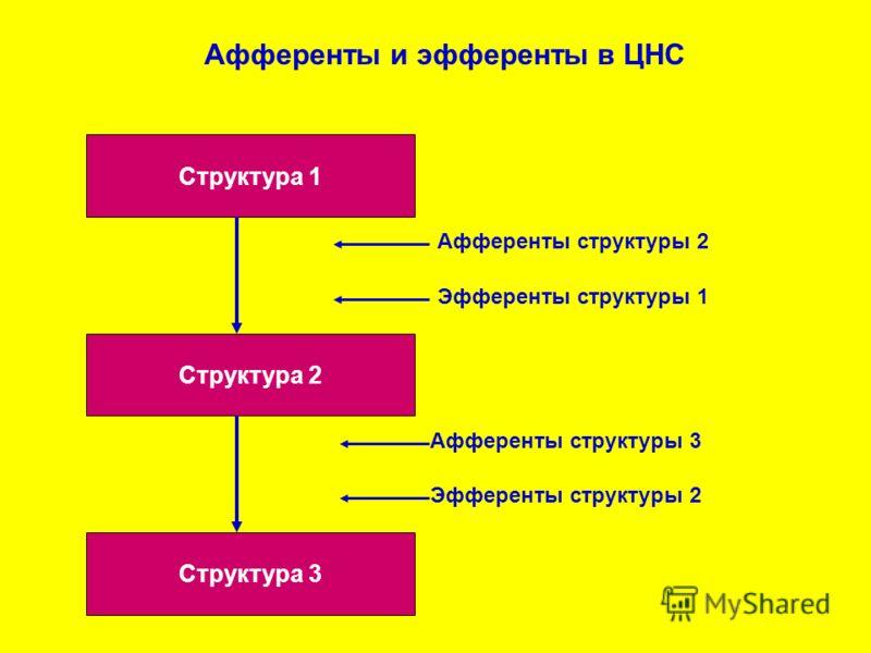 Структура 1 Структура 3 Структура 2 Афференты и эфференты в ЦНС Афференты структуры 2 Афференты структуры 3 Эфференты структуры 1 Эфференты структуры 2