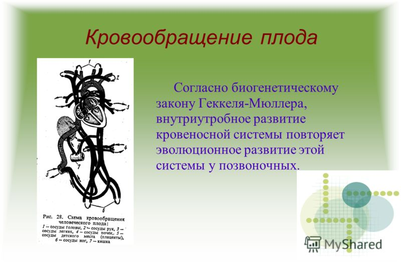"Презентация на тему: ""Курсовая"