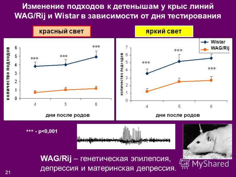 21 Изменение подходов к детенышам у крыс линий WAG/Rij и Wistar в зависимости от дня тестирования красный светяркий свет *** - p
