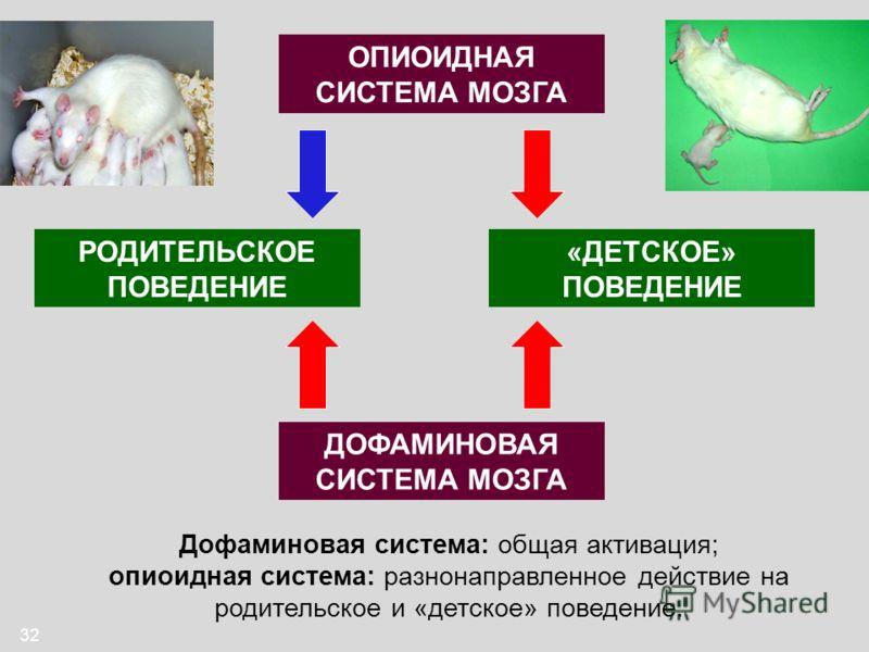32 ДОФАМИНОВАЯ СИСТЕМА МОЗГА РОДИТЕЛЬСКОЕ ПОВЕДЕНИЕ «ДЕТСКОЕ» ПОВЕДЕНИЕ ОПИОИДНАЯ СИСТЕМА МОЗГА Дофаминовая система: общая активация; опиоидная система: разнонаправленное действие на родительское и «детское» поведение.