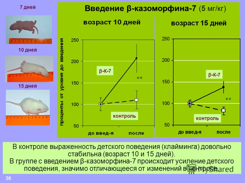 36 -К-7 контроль В контроле выраженность детского поведения (клайминга) довольно стабильна (возраст 10 и 15 дней). В группе с введением β-казоморфина-7 происходит усиление детского поведения, значимо отличающееся от изменений в контроле. ** 7 дней 10