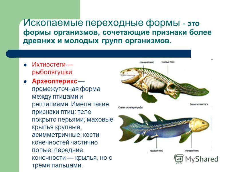 Ископаемые переходные формы - это формы организмов, сочетающие признаки более древних и молодых групп организмов. Ихтиостеги рыболягушки; Археоптерикс промежуточная форма между птицами и рептилиями. Имела такие признаки птиц: тело покрыто перьями; ма
