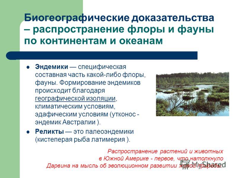 Биогеографические доказательства – распространение флоры и фауны по континентам и океанам Эндемики специфическая составная часть какой-либо флоры, фауны. Формирование эндемиков происходит благодаря географической изоляции, климатическим условиям, эда