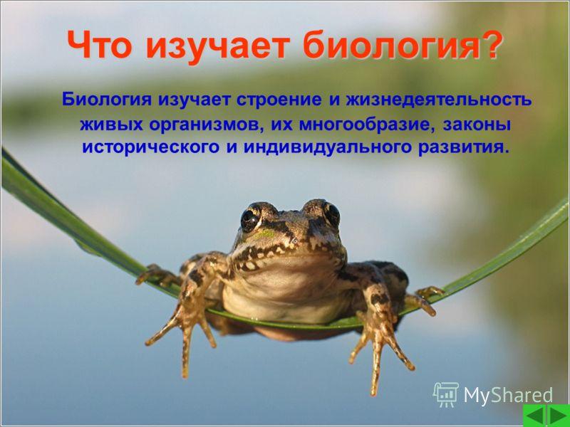 Что изучает биология? Биология изучает строение и жизнедеятельность живых организмов, их многообразие, законы исторического и индивидуального развития.