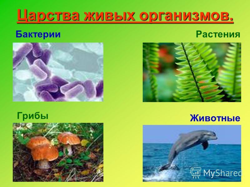 Царства живых организмов. Бактерии Грибы Растения Животные