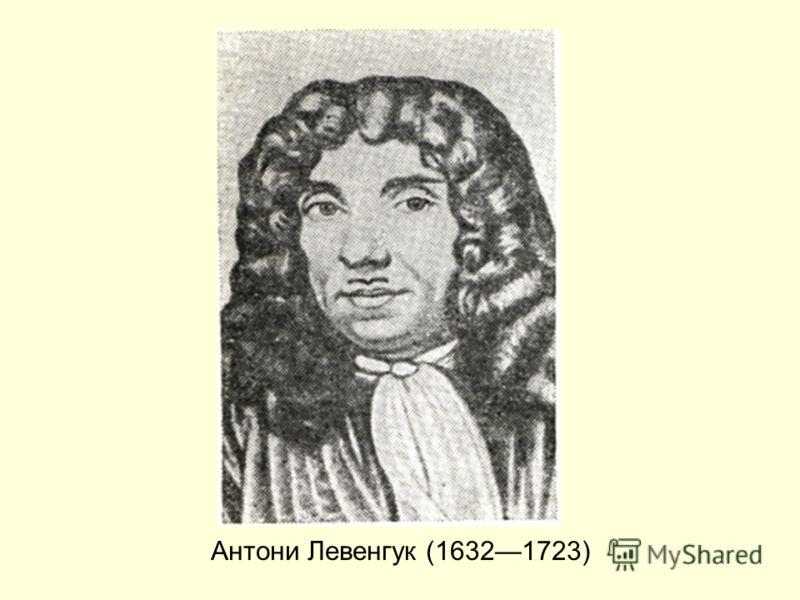 Антони Левенгук (16321723)