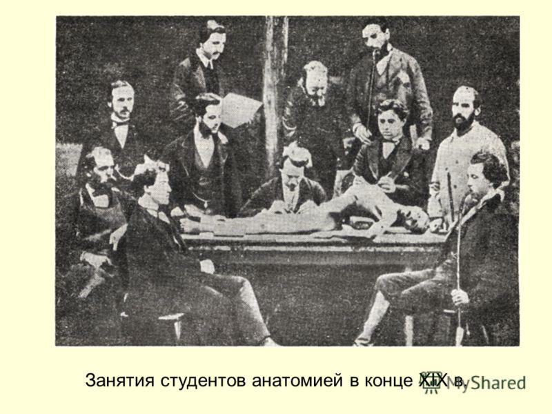 Занятия студентов анатомией в конце XIX в.