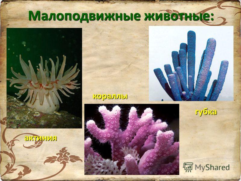 Малоподвижные животные: актиния кораллы губка