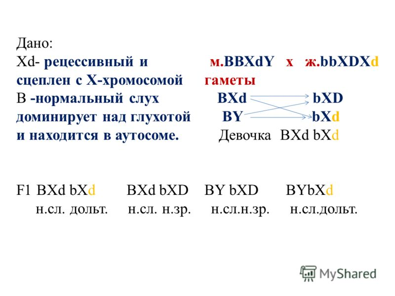 Дано: Хd- рецессивный и м.ВВХdY х ж.bbXDXd сцеплен с Х-хромосомой гаметы В -нормальный слух BXd bXD доминирует над глухотой BY bXd и находится в аутосоме. Девочка BXd bXd F1 BXd bXd BXd bXD BY bXD BYbXd н.сл. дольт. н.сл. н.зр. н.сл.н.зр. н.сл.дольт.