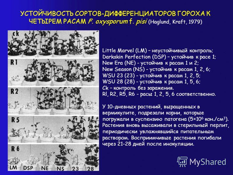 УСТОЙЧИВОСТЬ СОРТОВ-ДИФФЕРЕНЦИАТОРОВ ГОРОХА К ЧЕТЫРЕМ РАСАМ F. oxysporum f. pisi (Haglund, Kraft, 1979) Little Marvel (LM) – неустойчивый контроль; Darkskin Perfection (DSP) – устойчив к расе 1; New Era (NE) - устойчив к расам 1 и 2; New Season (NS)