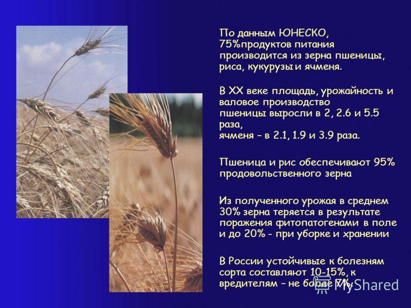 По данным ЮНЕСКО, 75%продуктов питания производится из зерна пшеницы, риса, кукурузы и ячменя. В XX веке площадь, урожайность и валовое производство пшеницы выросли в 2, 2.6 и 5.5 раза, ячменя – в 2.1, 1.9 и 3.9 раза. Пшеница и рис обеспечивают 95% п