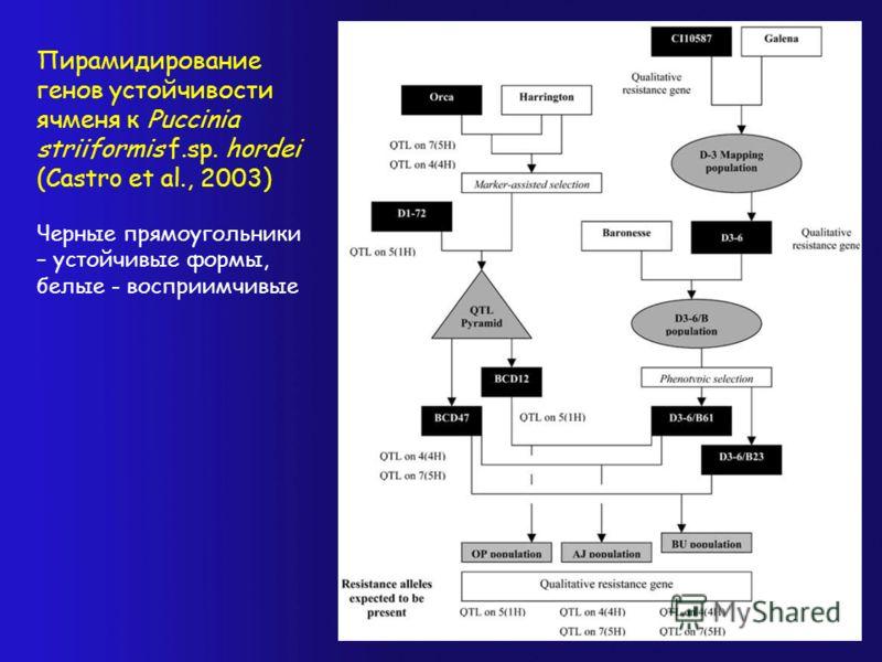Пирамидирование генов устойчивости ячменя к Puccinia striiformis f.sp. hordei (Castro et al., 2003) Черные прямоугольники – устойчивые формы, белые - восприимчивые