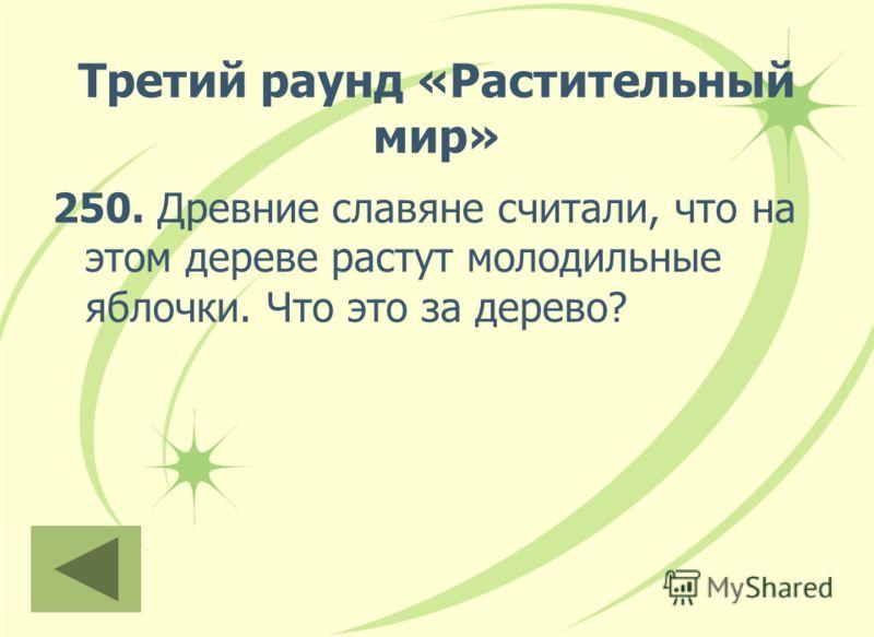 Третий раунд «Растительный мир» 250. Древние славяне считали, что на этом дереве растут молодильные яблочки. Что это за дерево?