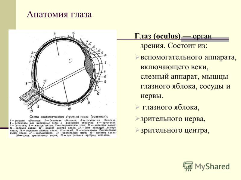 Анатомия глаза Глаз (oculus) орган зрения. Состоит из: вспомогательного аппарата, включающего веки, слезный аппарат, мышцы глазного яблока, сосуды и нервы. глазного яблока, зрительного нерва, зрительного центра,