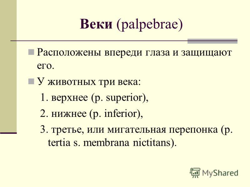 Веки (palpebrae) Расположены впереди глаза и защищают его. У животных три века: 1. верхнее (p. superior), 2. нижнее (p. inferior), 3. третье, или мигательная перепонка (p. tertia s. membrana nictitans).