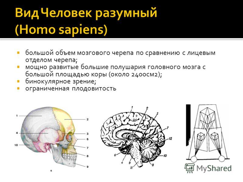 большой объем мозгового черепа по сравнению с лицевым отделом черепа; мощно развитые большие полушария головного мозга с большой площадью коры (около 2400см2); бинокулярное зрение; ограниченная плодовитость