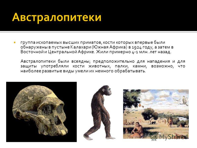 группа ископаемых высших приматов, кости которых впервые были обнаружены в пустыне Калахари (Южная Африка) в 1924 году, а затем в Восточной и Центральной Африке. Жили примерно 4-1 млн. лет назад. Австралопитеки были всеядны; предположительно для напа