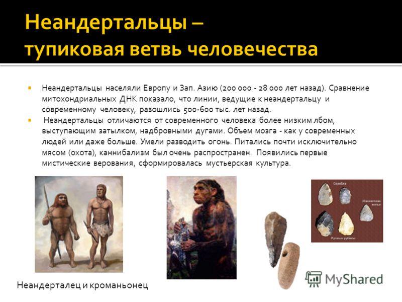 Неандертальцы населяли Европу и Зап. Азию (200 000 - 28 000 лет назад). Сравнение митохондриальных ДНК показало, что линии, ведущие к неандертальцу и современному человеку, разошлись 500-600 тыс. лет назад. Неандертальцы отличаются от современного че