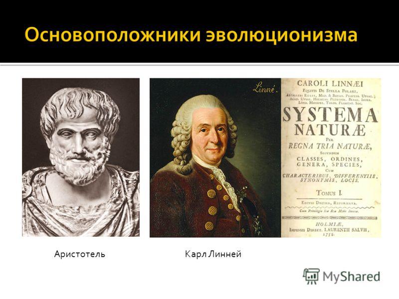 АристотельКарл Линней