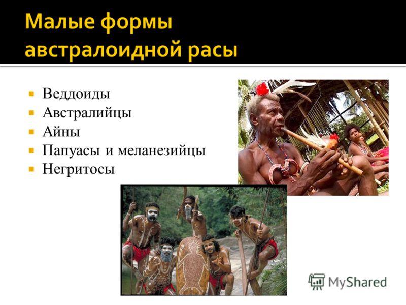 Веддоиды Австралийцы Айны Папуасы и меланезийцы Негритосы