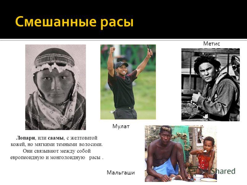 Лопари, или саамы, с желтоватой кожей, но мягкими темными волосами. Они связывают между собой европеоидную и монголоидную расы. Мулат Метис Мальгаши