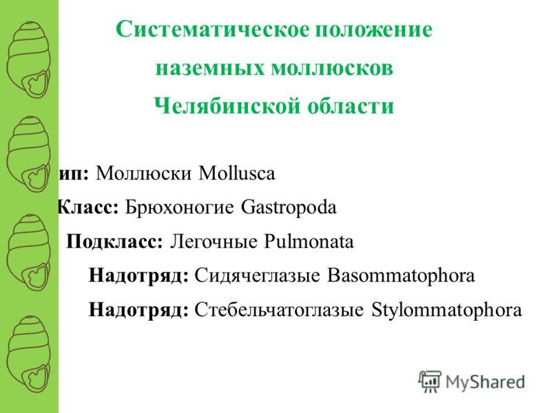 Тип: Моллюски Mollusca Класс: Брюхоногие Gastropoda Подкласс: Легочные Pulmonata Надотряд: Сидячеглазые Basommatophora Надотряд: Стебельчатоглазые Stylommatophora Систематическое положение наземных моллюсков Челябинской области