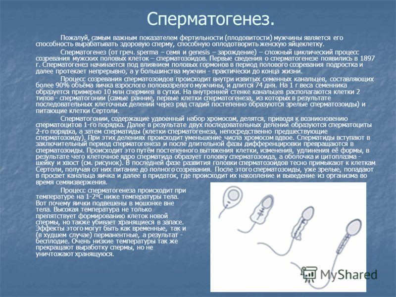 Сперматогенез. Пожалуй, самым важным показателем фертильности (плодовитости) мужчины является его способность вырабатывать здоровую сперму, способную оплодотворить женскую яйцеклетку. Сперматогенез (от греч. sperma – семя и genesis – зарождение) – сл